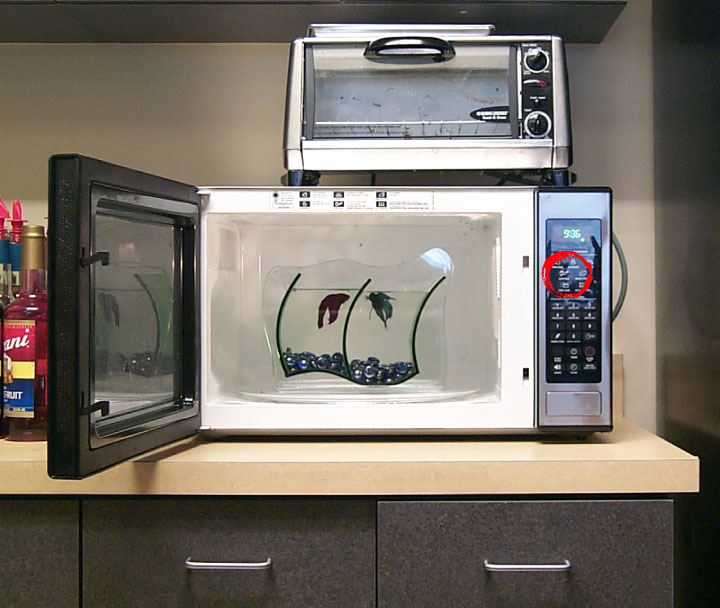 Fish in microwave for Cooking fish in microwave
