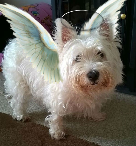 Angel Bonnie