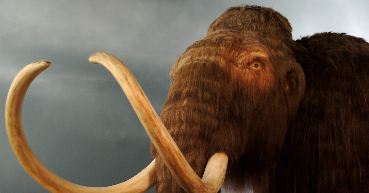 Woolly Mammoth Natural History Museum