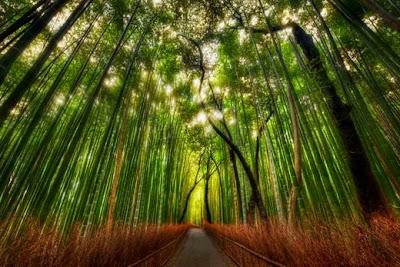 Hutan Bambu (Jepang)