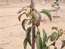 Plantas en el desierto