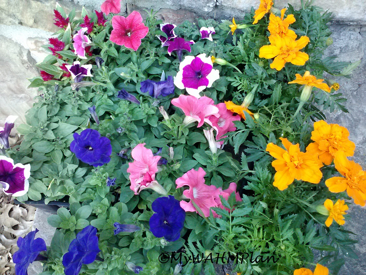 brightly colored flowers