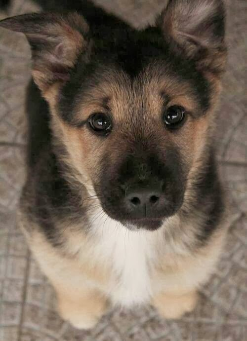 images of baby dogs - photo #49