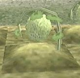 harvest moon wonderful life melon crop
