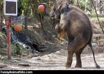 Beautiful dangerous wild animals pets of Africa Elephant Games