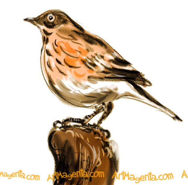 Meadow Pipit sketch painting. Bird art drawing by illustrator Artmagenta.