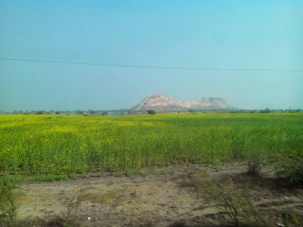 It to farming at nachankulam yellow flowers and mustard oil it was wonderful to see the collective sight of yellow flowers upto the horizon at the same time was suspecting why the farmers are here mightylinksfo