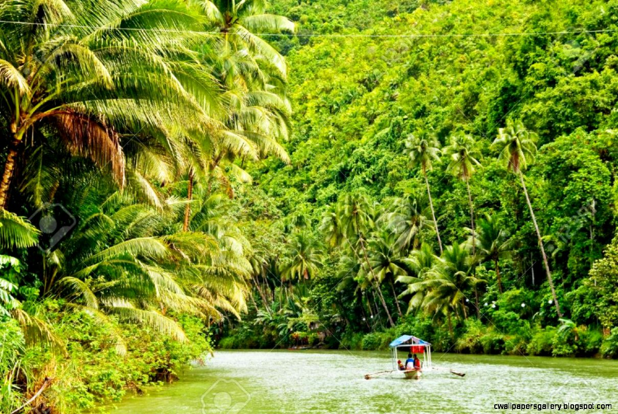 Amazon Rainforest Stock Photos Pictures Royalty Free Amazon
