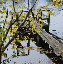 old boatbridge in forest, November