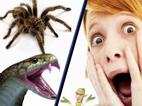 cuidados com animais peçonhentos, cobras, aranhas, Escorpião
