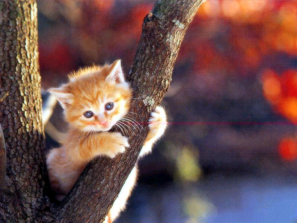 50 Hd Cats Latest Pictures Animal Wallpapers Galleries