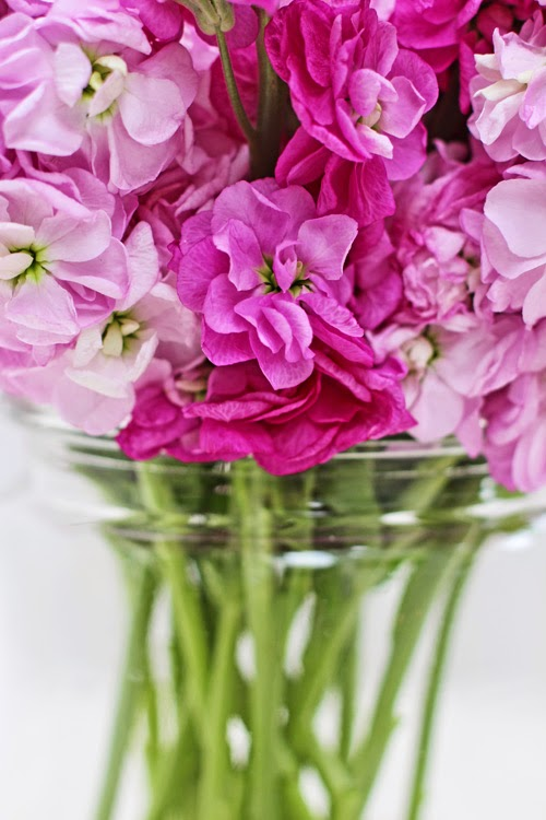 Of spring and summer a bunch for the weekend 53 more scented pink stock flowers mightylinksfo