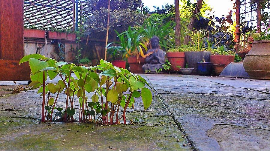 plantas,jardín,primavera,naturaleza,losas,pizarra