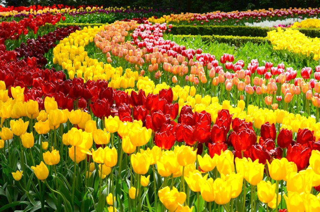 Álbum de Viagens Keukenhof, o jardim mais bonito do mundo
