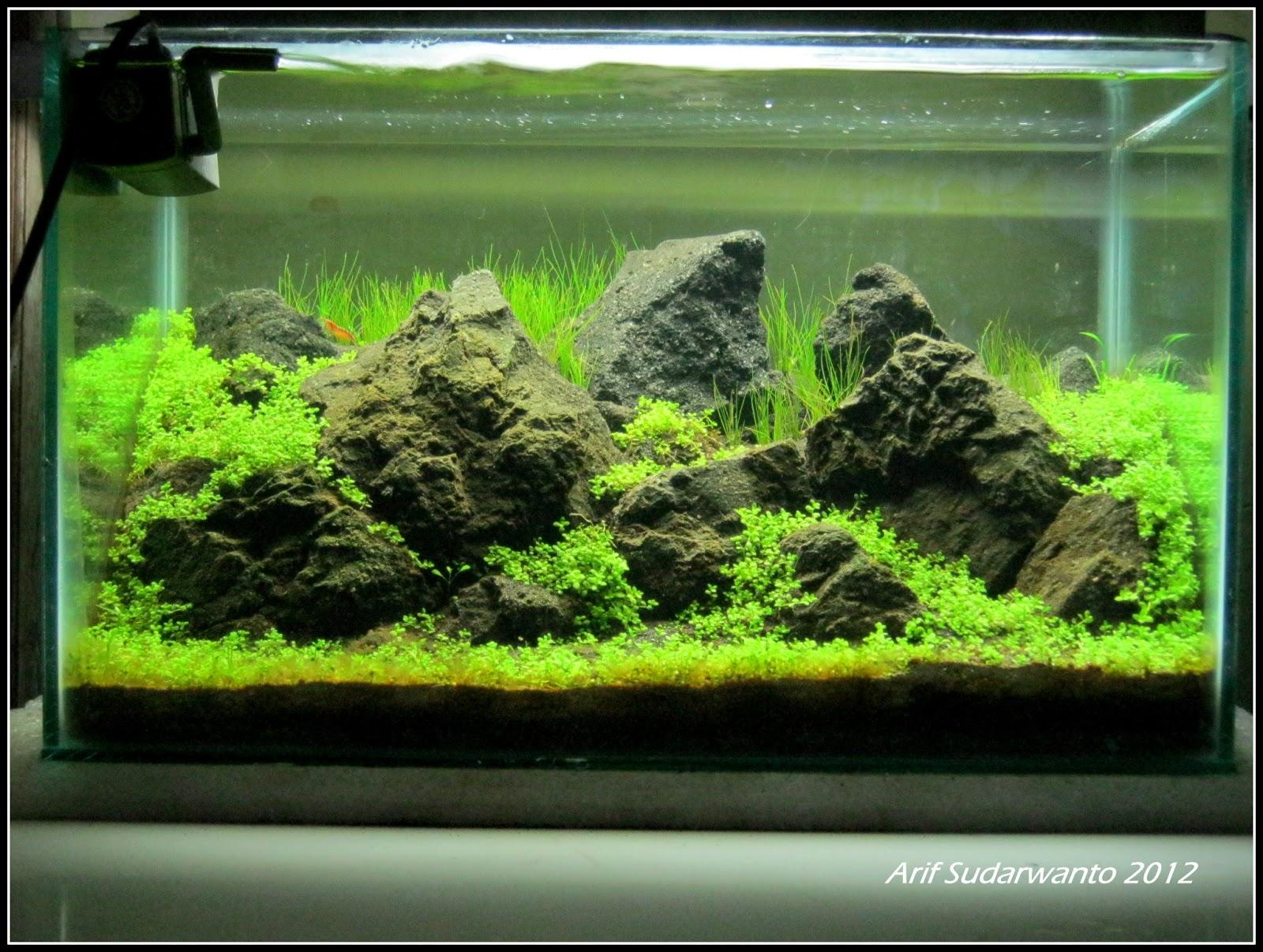 IWAQU Toko Ikan Hias - Aquascape, Ikan Hias, Aquarium dan ...