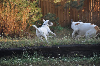 Sophie and Lucky turning sharply as they run