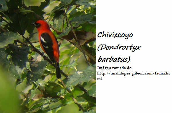 RESERVA DE LA BIOSFERA SIERRA GORDA :v Abio-chivizcoyo