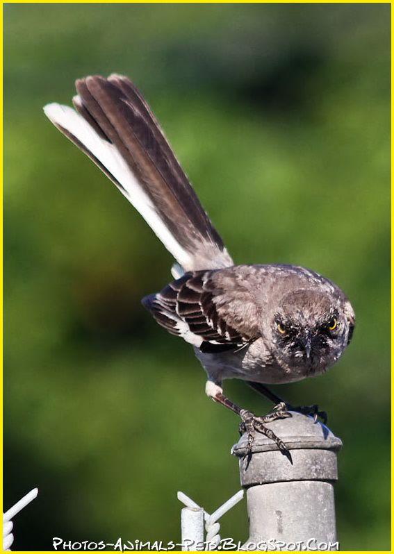 http://3.bp.blogspot.com/-W9ljxRX5zAw/Tt-PxrALW-I/AAAAAAAACjc/VDga-qC0t4U/s1600/bird%2Bpictures%2B.jpg