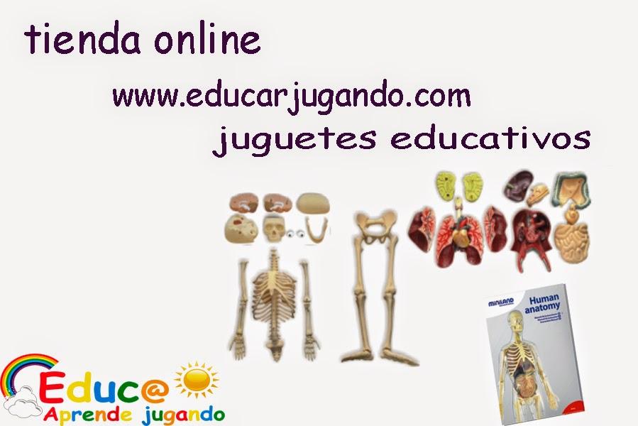 EDUCAR JUGANDO CON JUGUETES EDUCATIVOS: anatomia cuerpo humano