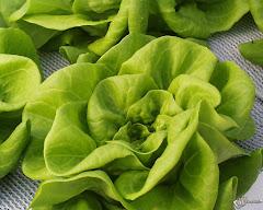 Tabella Nutrizionale - Verdura
