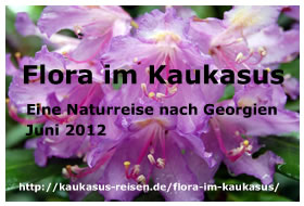 Flora im Kaukasus