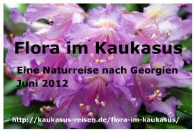 Flora im Kaukasus