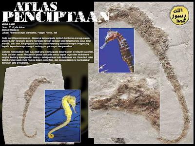 Fosil Kuda Laut Umur 23 5 juta tahun Zaman Miocene Lokasi Rimini Itali