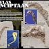 Fosil: Kuda Laut | Umur: 23-5 juta tahun | Zaman: Miocene | Lokasi: Rimini, Itali