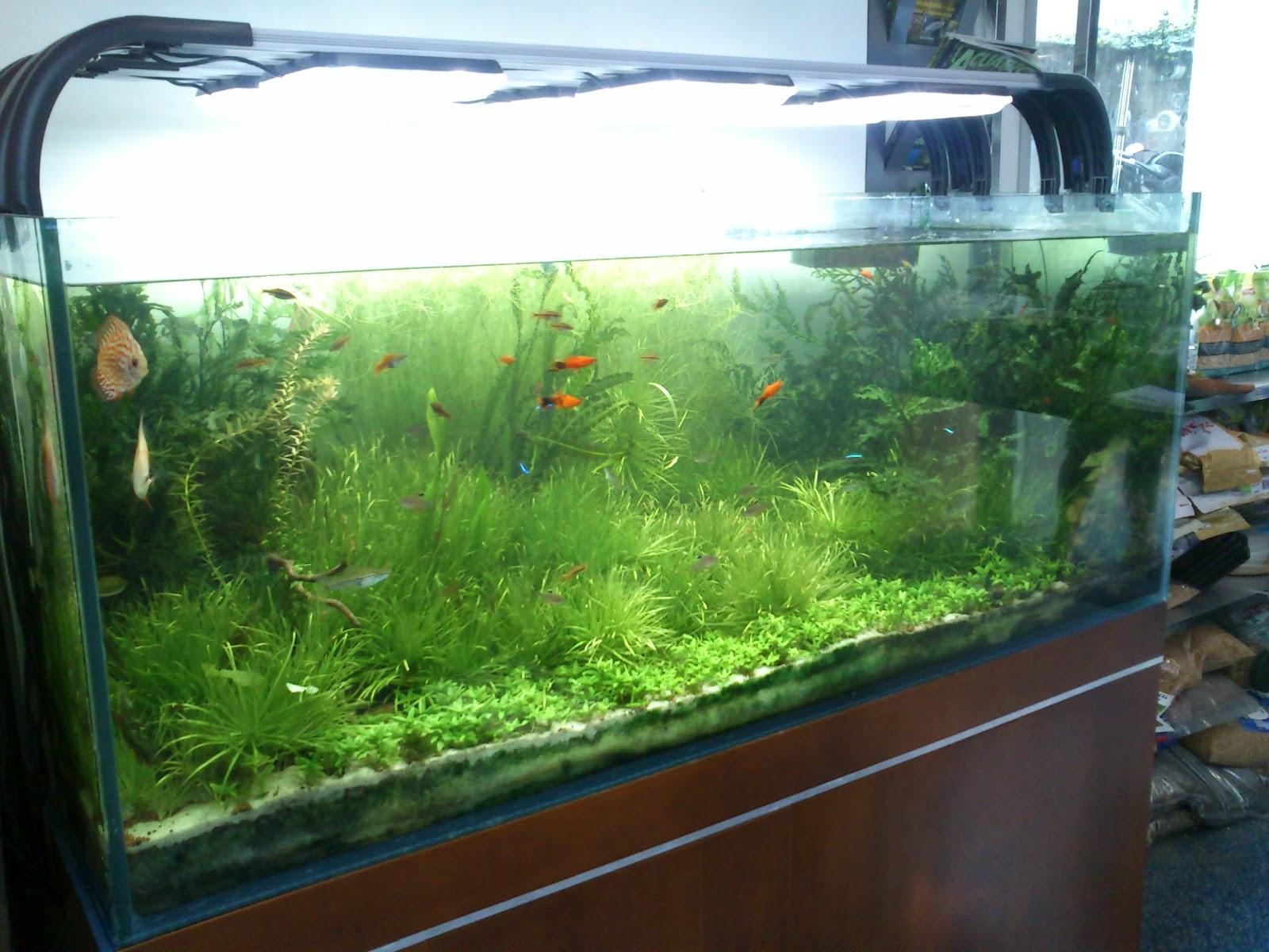 Discus vigo montaje acuario 500 litros - Montaje de acuarios ...
