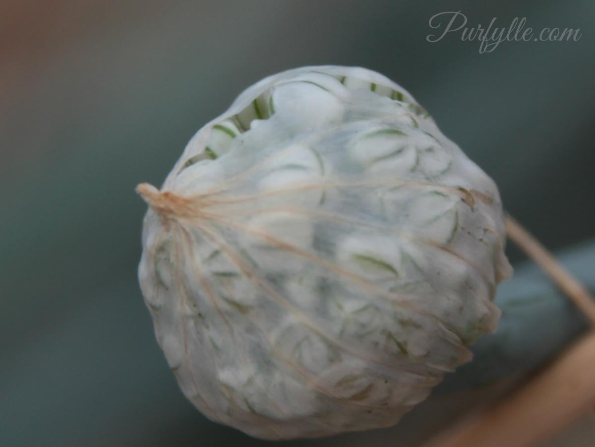 Purfylle ion Flower