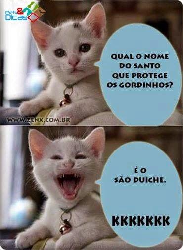 Imagens de piadas de gato para postar no Facebook
