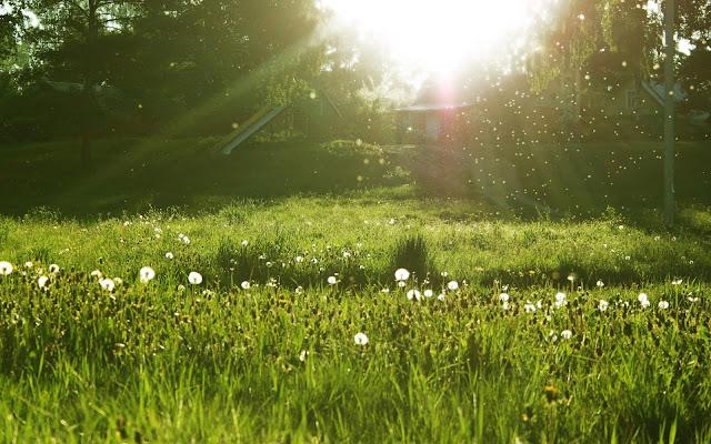 Hình nền đẹp mùa xuân - ảnh 17