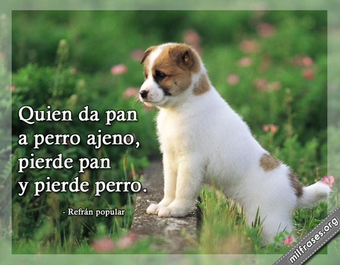 Quien da pan a perro ajeno, pierde el pan y pierde perro. frases, refranes y dichos populares