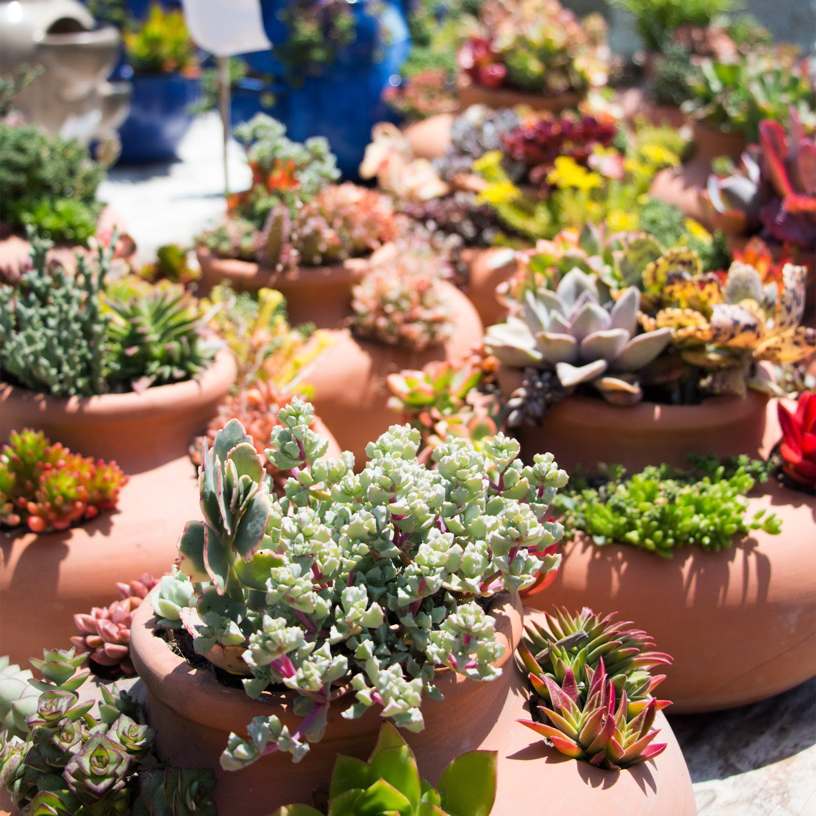They Have A Huge Variety Of Succulentost Them You Can Get For 2 5 I Really Loved Some Their Arrangements Cosentino S Nursery Malibu
