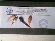 Ikan bebas Penyakit