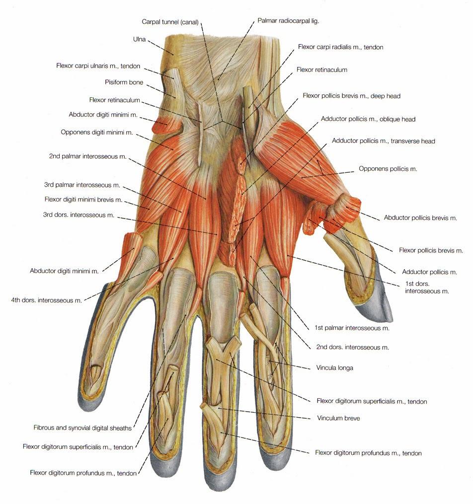 hand pezen