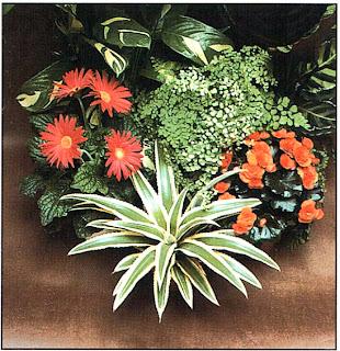 Группа из небольших растений, расположенных на низком уровне, особенно эффектна при взгляде сверху