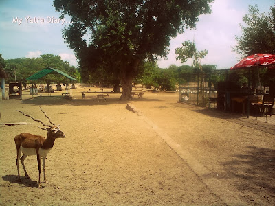 Deer park in Raman Reti, Gokul-Mathura,Uttar Pradesh