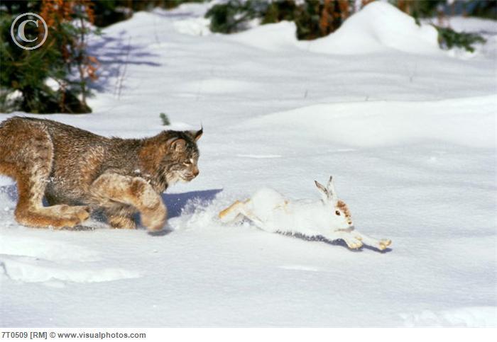 essay on hunting animals