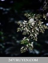 Trăng Nở Hoa