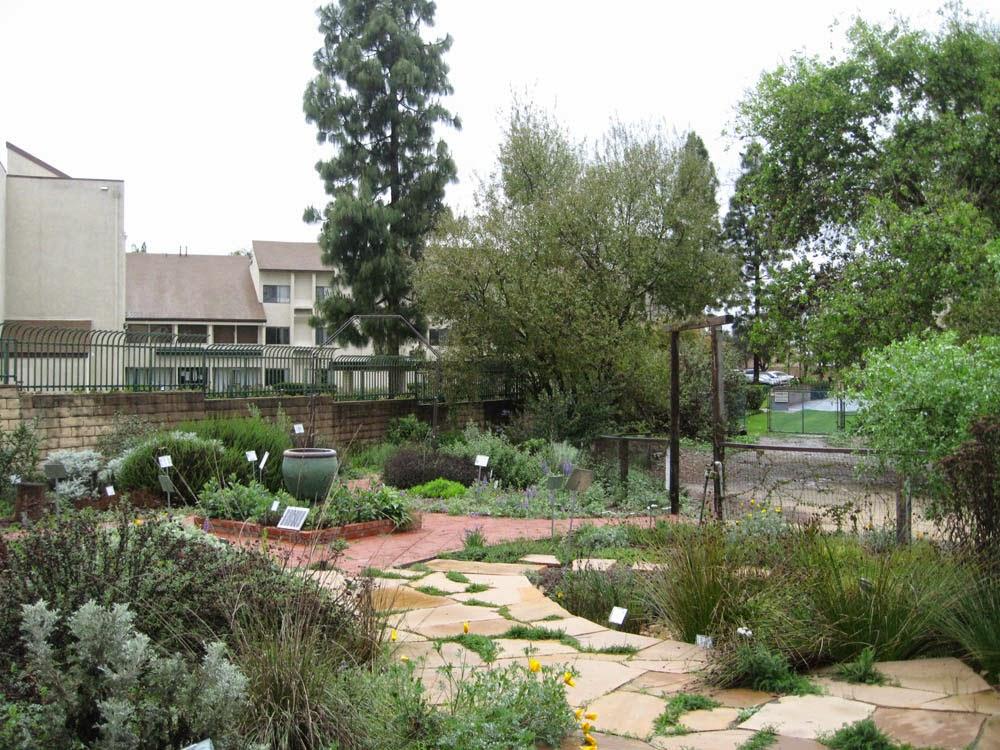 Mother Nature 39 S Backyard A Water Wise Garden Seasons In A Southern California Garden