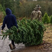 Cutting down our Christmas tree.
