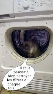Chatte dans un sèche linge.