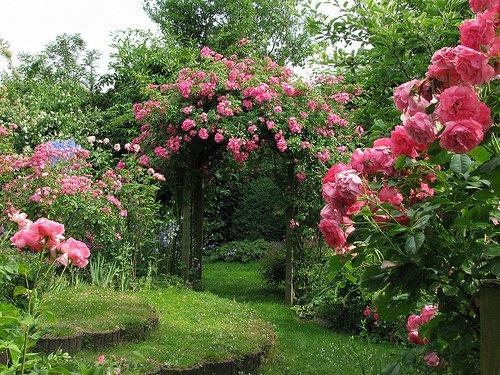 The Garden of Gods Glory: Flowers In God\'s Garden