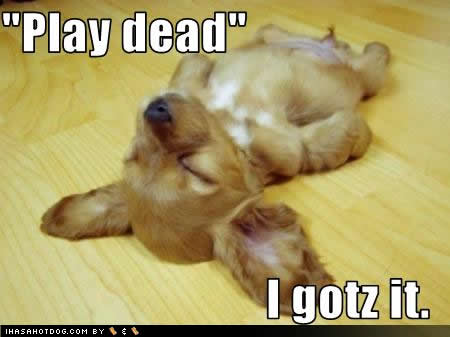 [Image: cute-puppy-pictures-play-dead%255B1%255D.jpg]