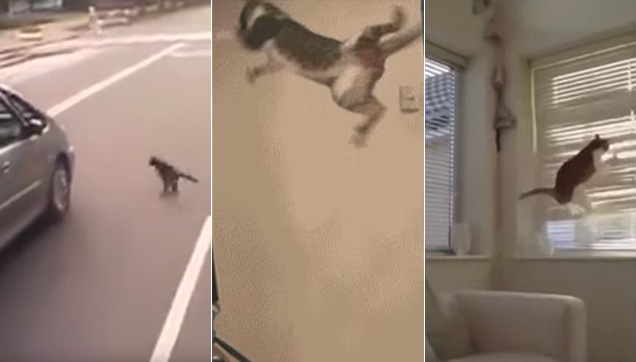 A collection of cat fail videos from around the world.