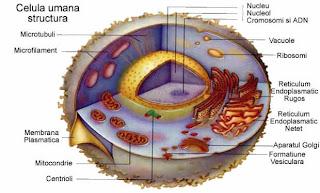Informatii despre structura celulei
