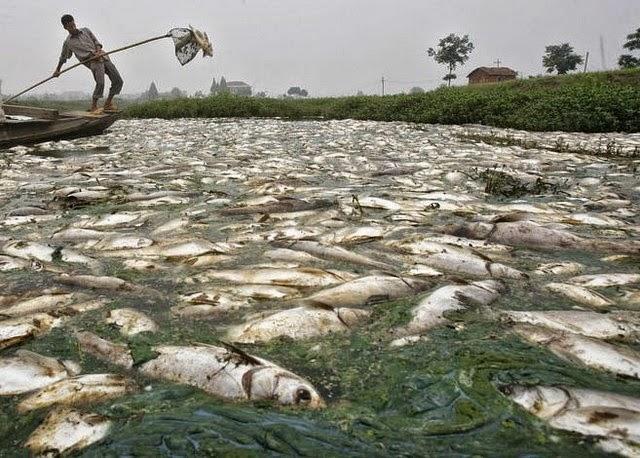 dampak pencemaran air