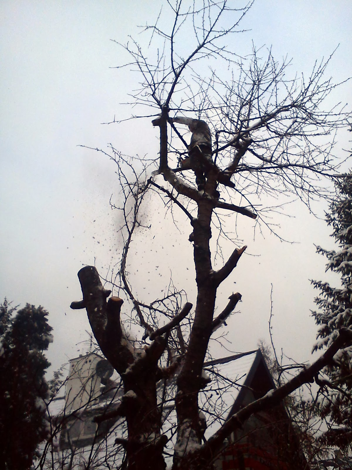 Wycinka alpinistyczna drzew, warszawa, polska