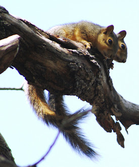 Photograph of baby squirrels in Marble Falls, Texas.